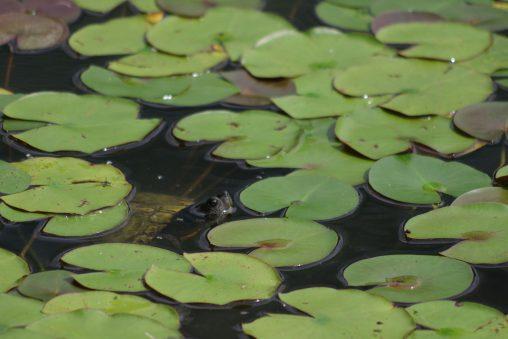 隙間から顔を出すカメ – Turtle