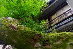 料亭の裏 – Back of Japanese restaurant