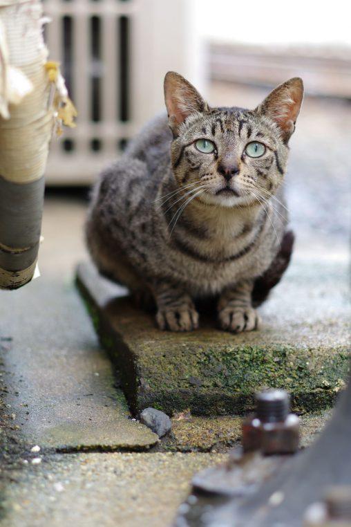 小綺麗な野良 – Stray cat