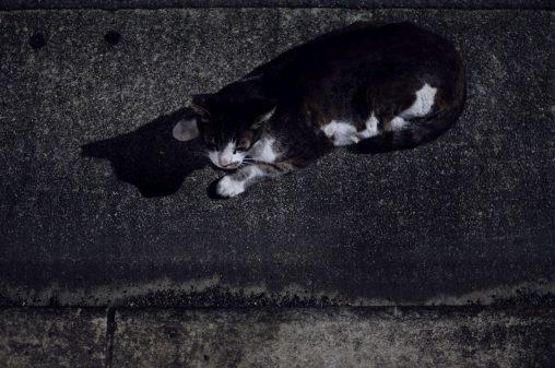 夜の猫 – Stray cat