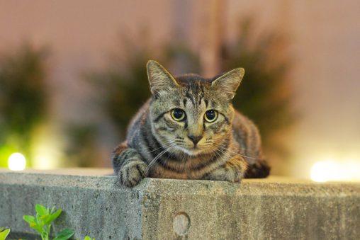 夜の猫 – Night cat