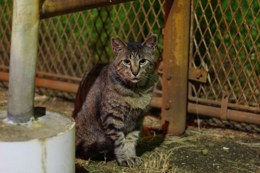 ちょっと寄り目 – Stray cat