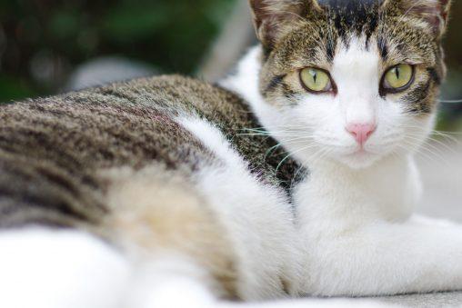 悠然たる猫 – Calm cat