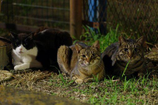 親子 – Cats family