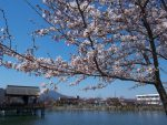 高田千本桜 – Riverside Sakura trees
