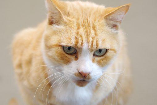 触らせてくれるネコ – Touchable