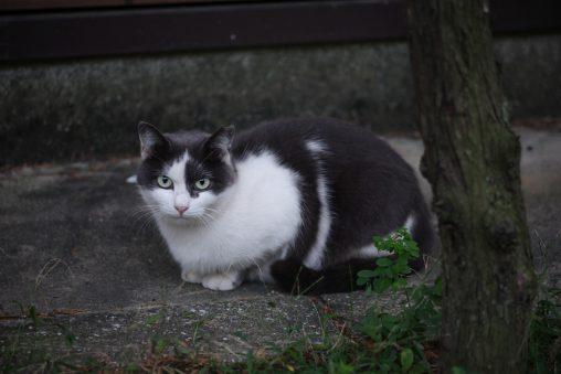 触らせないネコ – Untouchable