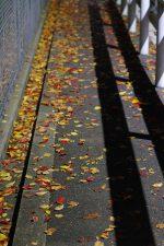 落葉の歩道 – Shed leaves