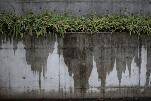 うちっぱなし – Wet concrete