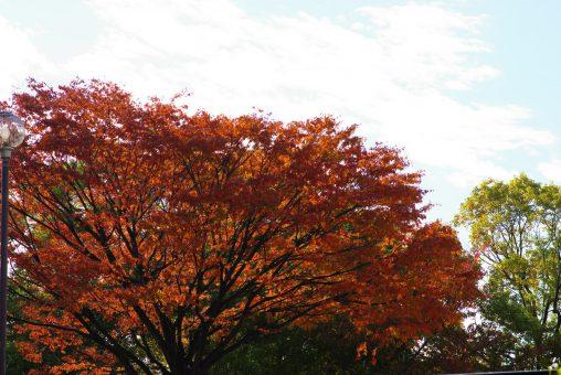 秋の空 – Autumn sky