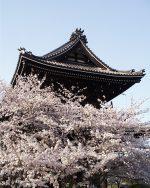 桜の根来寺 – Negoro temple