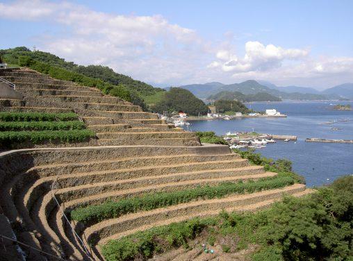 遊子水荷浦の段畑 – Danbata in Yusu Mizugaura