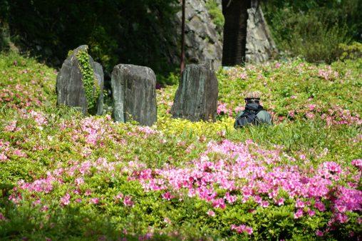 つつじ園 – Azalea garden