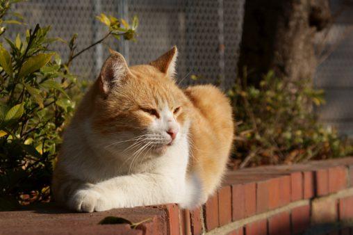 レンガ壁の猫 – Cat on brick wall