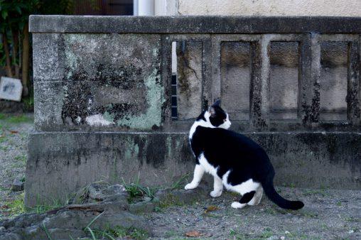 コンクリートに白黒 – Monotone
