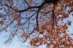 冬の桜 – Sakura in Winter
