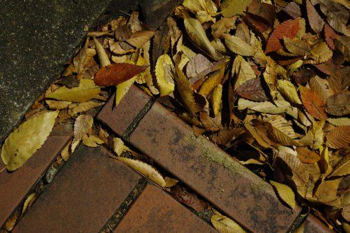 晩秋の片隅 – Edge of Late Autumn