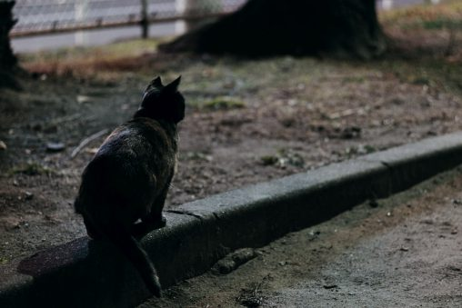 2021 新春初猫 – A cat I met first in 2021