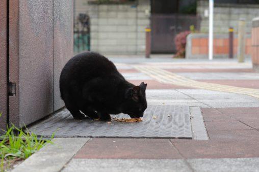 黒猫食事中 – A cat is eating