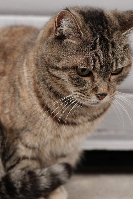 おとなしい猫 – Quiet cat