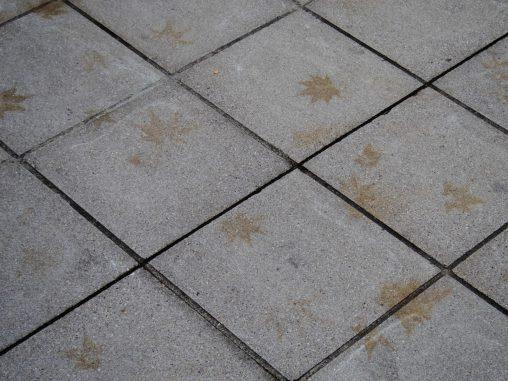 モミジの足跡 – Footsteps of Maple leaf