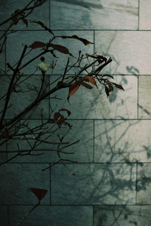 半影 – Half Shadow