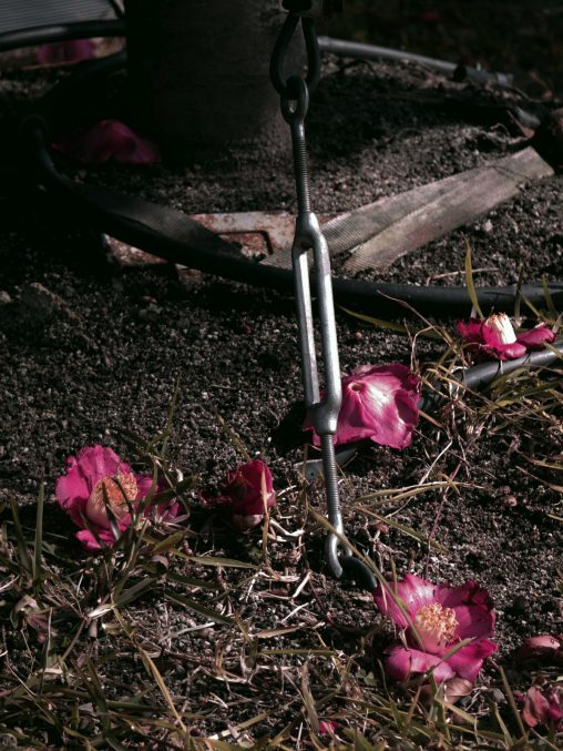 落ち首 – Fallen camellia flowers