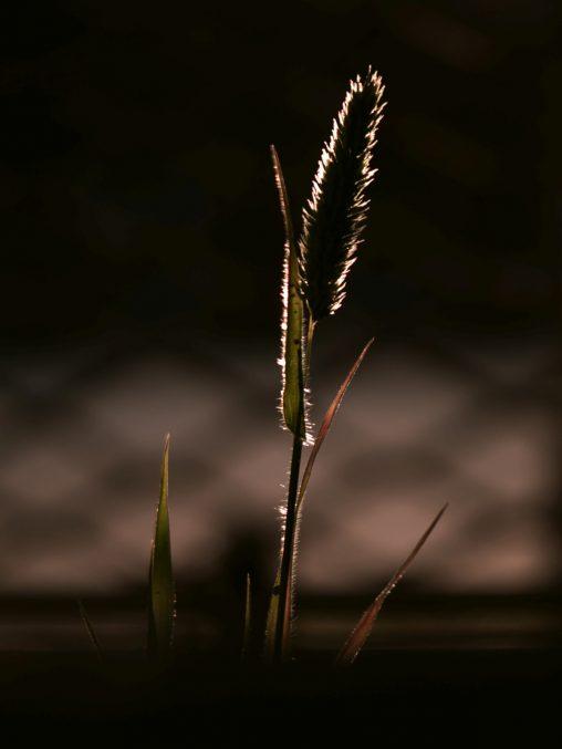 隙間の夕日 – Foxtail