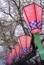 桜提灯 – Sakura paper-lantern