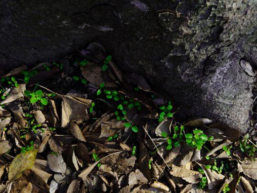 若芽 – Sprouts