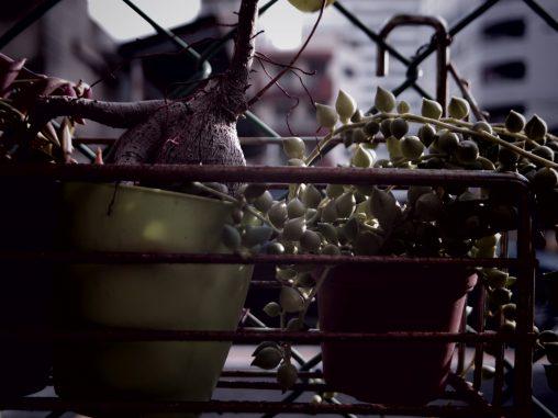 窮屈 – Potted plants