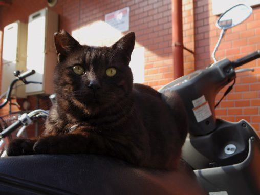 シートの座り心地 – Black cat