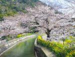 山科・三月 – Yamashina in March