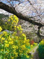 疎水脇の小路 – Flowery promenade