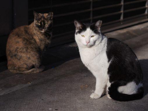 餌待ち野良猫 – Stray cats waiting for food