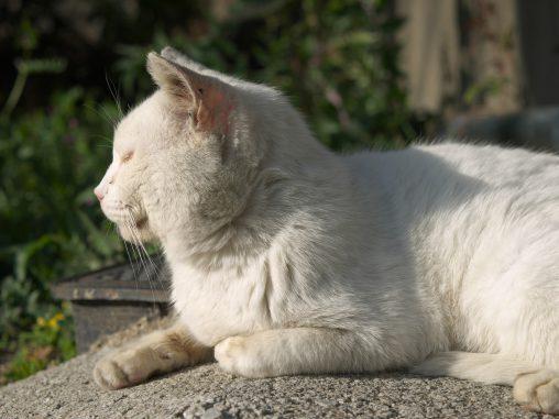 老猫 – Old cat