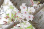 散る・咲く – Fall or Bloom