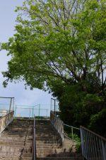 上町台地を見上げる –  Uemachi Plateau