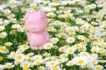 花の中 – Pig on swamp chrysanthemum