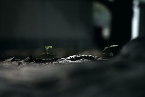 倒木の芽生え – Sprouts on fallen tree