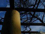 天に蓋する – Wisteria shelf in Winter