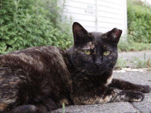 サビ猫 – Stray cat