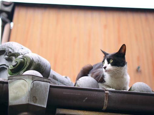 屋根に猫(3枚) – Roof top cat (3 pics)