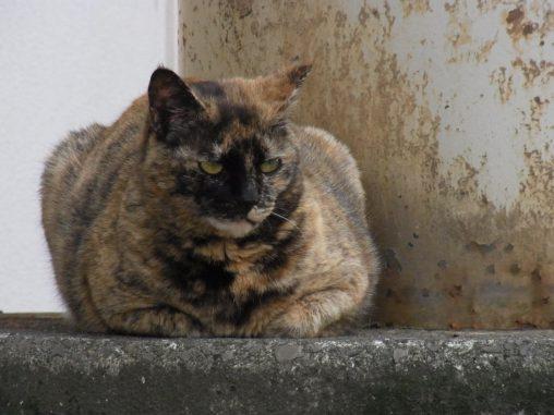 ハードボイルド猫 – Hard-boiled cat
