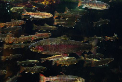 動物園の魚 – Fish at zoo