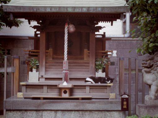 お社とネコ – Cat at Shrine