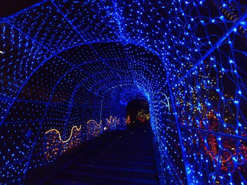 なんばパークスイルミネーション – Illuminations at Namba Parks Garden