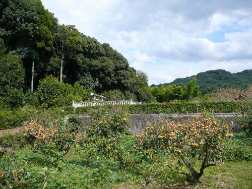 山辺の道の古墳(3枚) – Tombs at side of Yamanobe ancient road (3 pics)