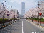 りんくうタウンの桜(2枚) – Sakura at Rinku Town (2 pics)