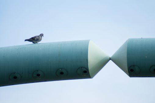 高所から – a Pigeon
